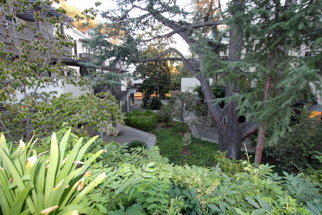Mountain View Townhome for Sale - front garden